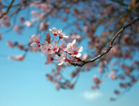 ゆきのまち通信:春はのどけからまし